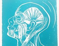 Muscle Head