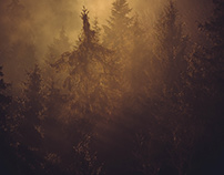Fog over the forest