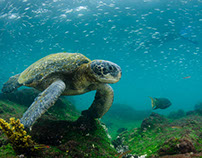 Experiencing Animal Life in the Galapagos Islands