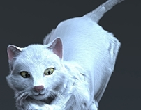 Rigging The Cat (And playing with Fur)