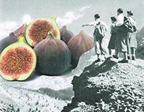 Fig dreams