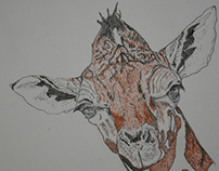 The Giraffe Study by Melissa J Aguiar