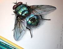 Insect studies