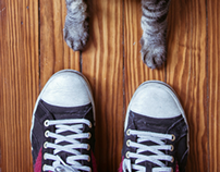 Retratos perros y gatos