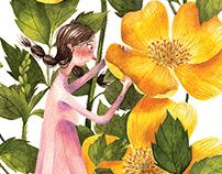 A closer look at a Rosa Sericea