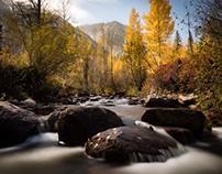 Cottonwood Creek Colorado