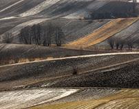 Gold fields. Ponidzie. Poland.