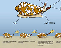Scientific Illustration: The Cone Snail