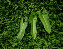 O Verde que eu vejo