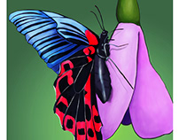 The image of the Butterfly