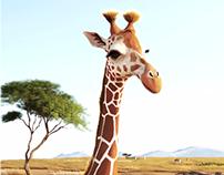 African Safari Giraffe 3D Animation Promo