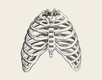Millennial Anatomy Series