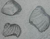 Shells / Conchas - Setembro/September 2012