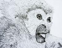 Mono ardilla - Saimiri sciureus