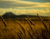 Grassfields - Colesburg 2012