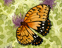 Regal Fritillary Conservation Illustration