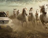 Horse Speed