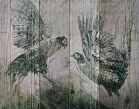 Pheasants Fight - in ink