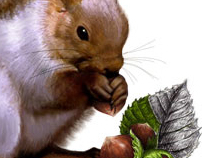 The squirrel with nuts