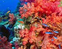 Infographic: Florida Coral Reefs