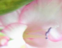 Blumen company