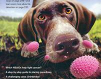 Veterinary Medicine Magazine Covers