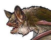 ¿Como es un murcielago?-How is a bat?