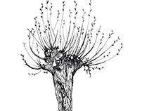 Illustratie wilgenboom