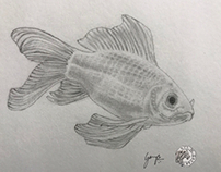 Goldfish - pencil sketch