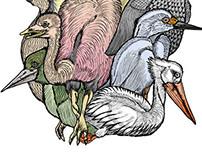 The eleven birds