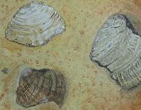 Watercolor Shells - September 2012
