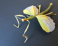 Goliath Stick Paper Insect