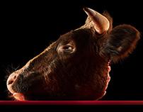 CUT – E ANIMALS / Bull