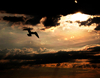 Birds, clouds and sky