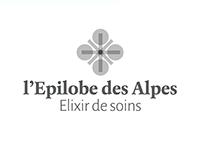 l'Epilobe des Alpes