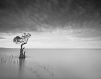 Sumba Island and The Dancing Tree