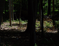 Maine - June 2015