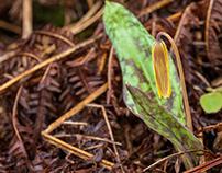Kawartha Springtime