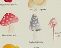 Fungi / Jamur