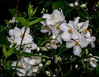 White garlands...