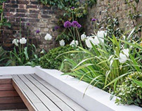 Contemporary garden design with lush planting