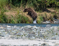 Alaska, Grizzly mom and cub sharing a salmon