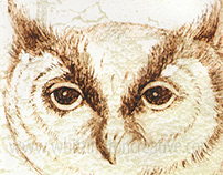 Owl in pencil (and Photoshop)