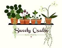 Sweety Oxalis