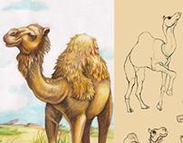 Camilla the camel