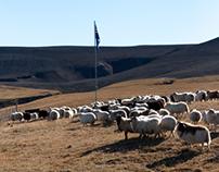 Landréttir í Áfangagili / Sheep round-up Áfangagil