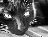 Banpo's Cat