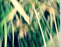 Les sous bois de la vie - Undergrowth of life