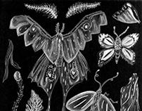 Entomology Illustrations