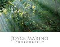 Joyce Marino Photography Cards & Mailers